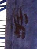 Bloody Hand Print Dark